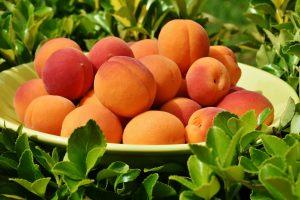 tại sao phải nhập khẩu trái cây tươi về bán