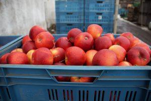 thủ tục nhập khẩu trái táo